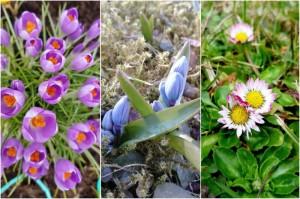 pavasario-augalai-21-80735599